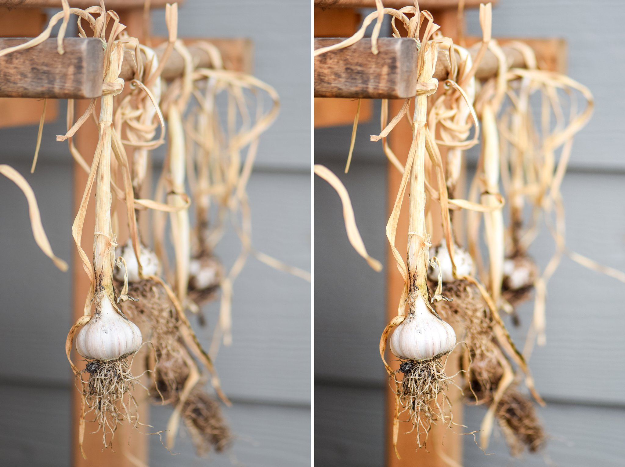 The same picture of garlic twice; the left is a basic edited version; the right has a couple extra Photoshop edits.